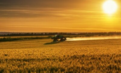 How innovation can boost the 'overlooked' and 'undervalued' health benefits of cereals