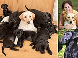 White labrador gives birth to 13 puppies and each one has black coat