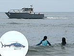 Maine and Long Island use helicopers and boats to patrol beaches for sharks