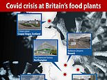 Coronavirus UK: Outbreaks at FORTY food processing plants