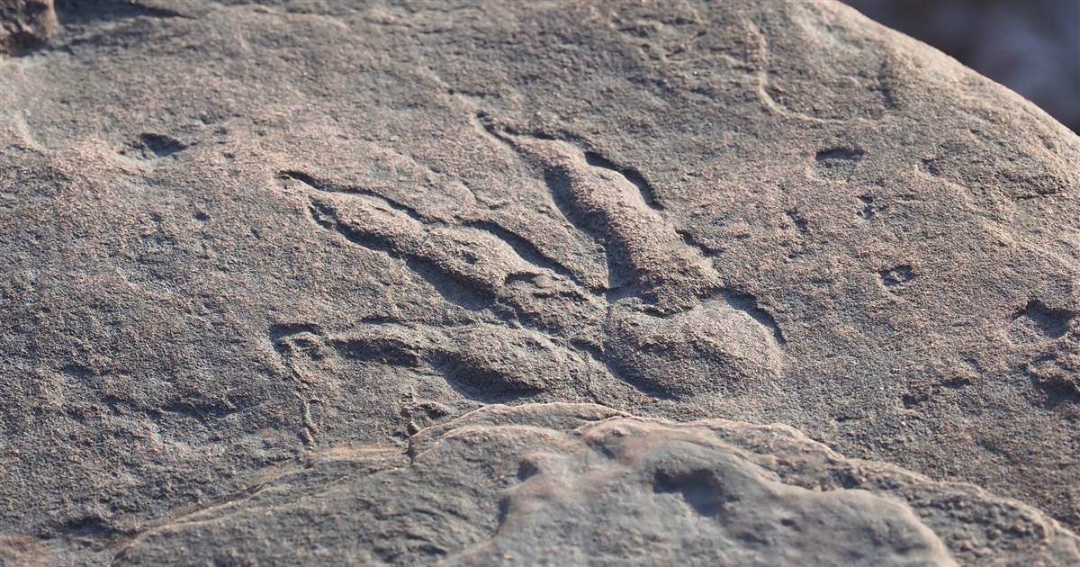 Four-year-old girl discovers 220 million-year-old dinosaur footprint at a beach in Wales