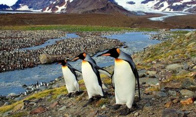 Penguins Spared After Mammoth Iceberg Splits Into Smaller Pieces