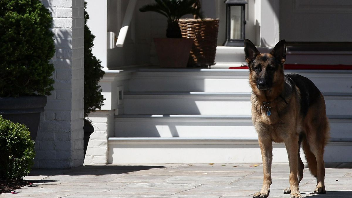 Report: Joe Biden's Dogs Moved Out Of White House After 'Biting Incident'