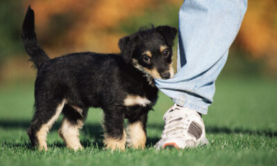 Your Puppy Is Born Ready to Interact With You