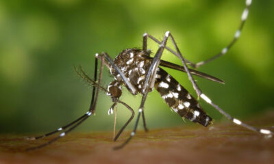 How AI and mosquito sex parties can save the world