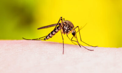 Florida Woman Dies From Dengue Fever