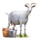 Health department warns against drinking raw goat milk; issues cease and desist order for retailers