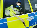 Call the Hot Fuzz! Police 'detain' swan and escort it to lake after it blocks traffic on busy road