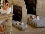 Meghan Markle's beagle looks unhappy at being disturbed during her 40th birthday address