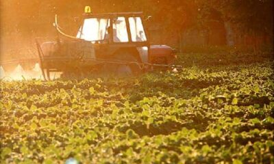 Pesticide to Be Banned Over Links to Problems in Children