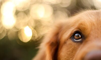 FDA Issues Warning About Illnesses, Deaths Linked to Midwestern Pet Foods