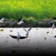 Shanghai Wetland Supporters Win Fight Against Forest Plans