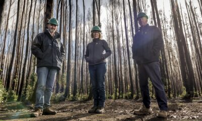 Wildfires Leave Forestry Companies Struggling for Insurance